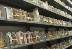Camerino – Archivio di Stato – Interventi di messa in sicurezza antincendio – sez. Camerino